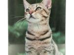 My Cat Glass Photo Frame