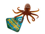 Squirting Octopus Toy